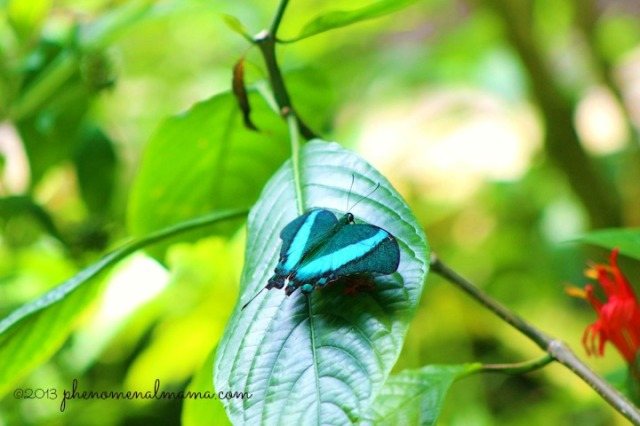 butterfly3